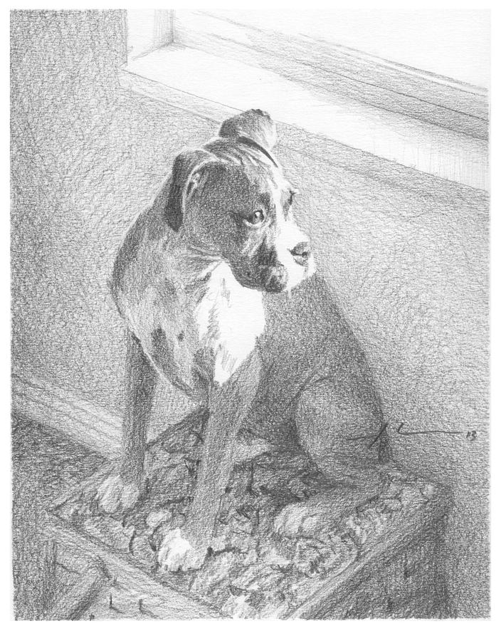 Boxer Dog By Window Pencil Portrait Drawing by Mike Theuer