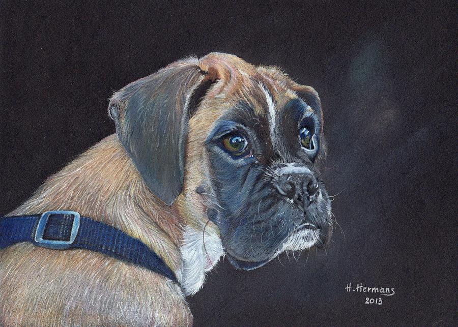 Animals Drawing - Boxer by Hendrik Hermans