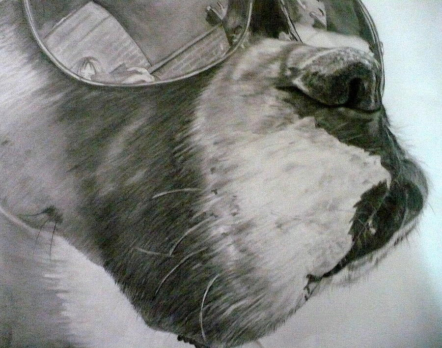 Boxer Drawing - Boxer  by Kelly Brown