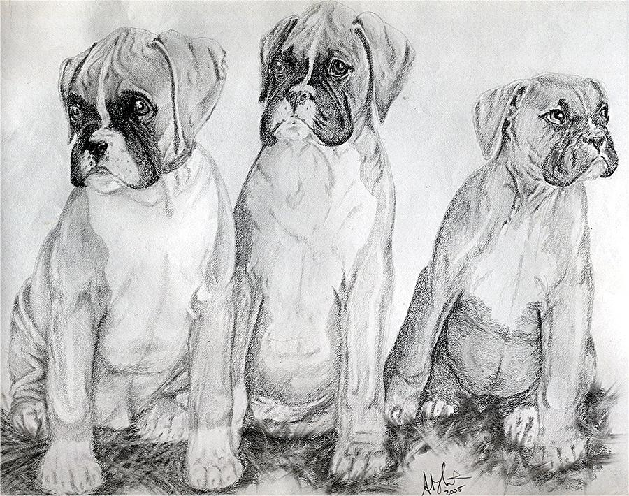 Boxer Puppy Dog Poster Print Drawing - Boxer Puppy Dog Poster Print by Olde Time  Mercantile