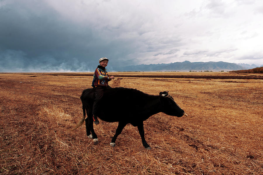 Boy Sitting Cow In Field Photograph by Touch The Word By Heart.
