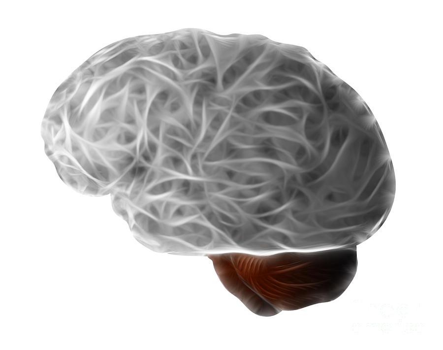 Anatomy Digital Art - Brain by Michal Boubin