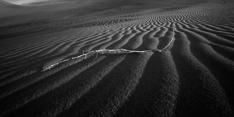 Black & White Photograph - Branch Out in the Desert by Peter Tellone