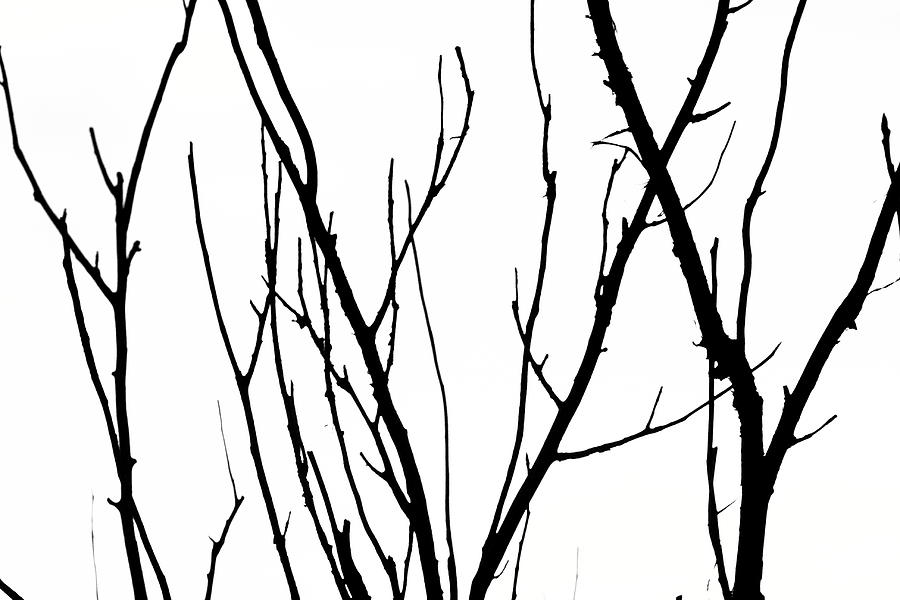 Branches Photograph - Branches by Aidan Moran