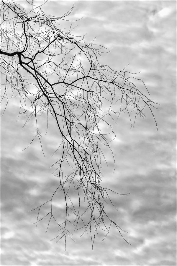 Winter Tree Branches Photograph - Branches And Clouds by Robert Ullmann