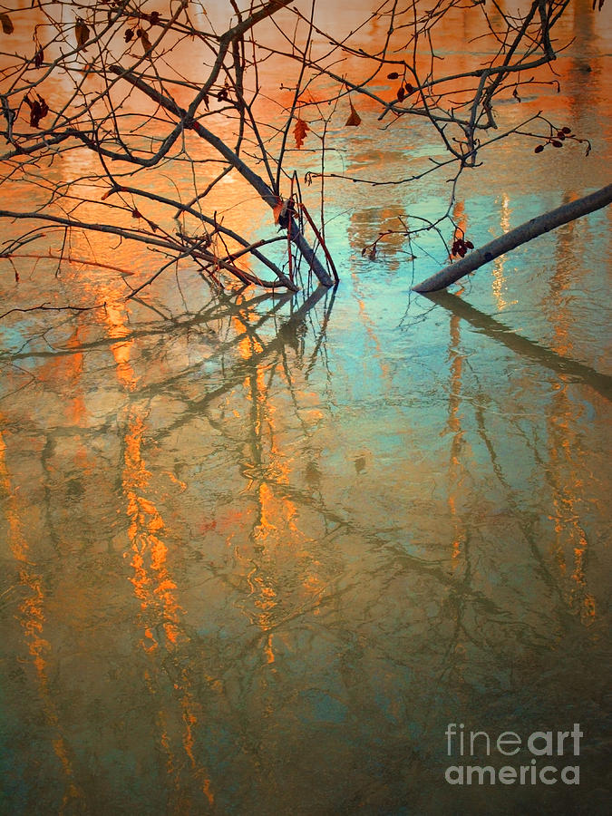 Nature Photograph - Branches And Ice by Tara Turner