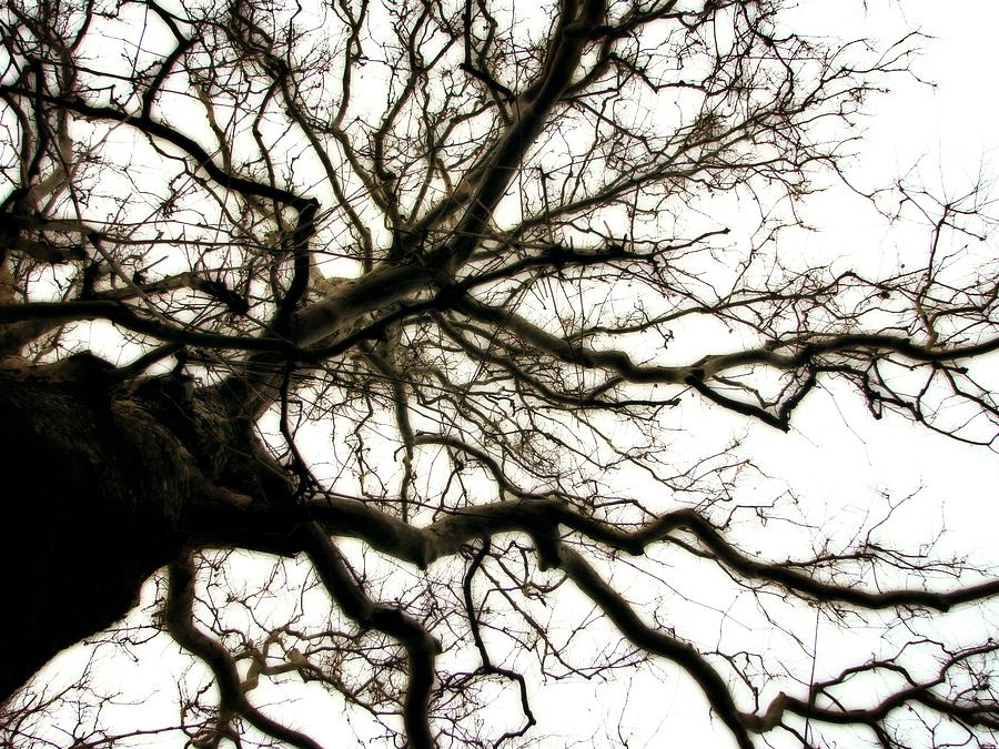 Branches Photograph - Branches by Michelle Calkins
