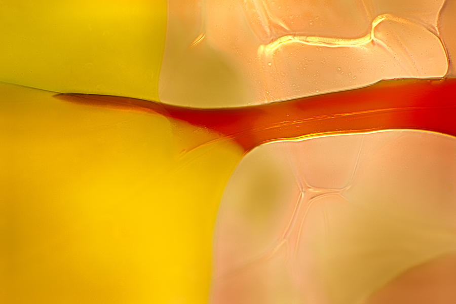 Abstract Photograph - Branches Of Light by Omaste Witkowski
