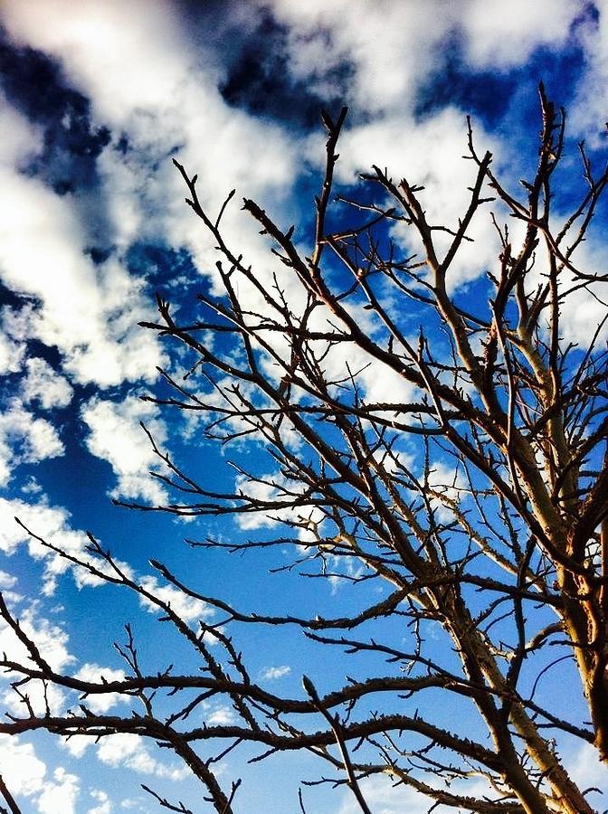 Clouds Digital Art - Branching Light  by Natalya Karavay