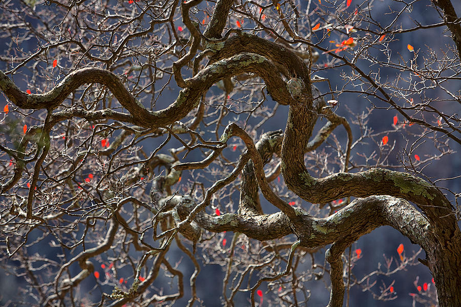 Branching Out by Steve White