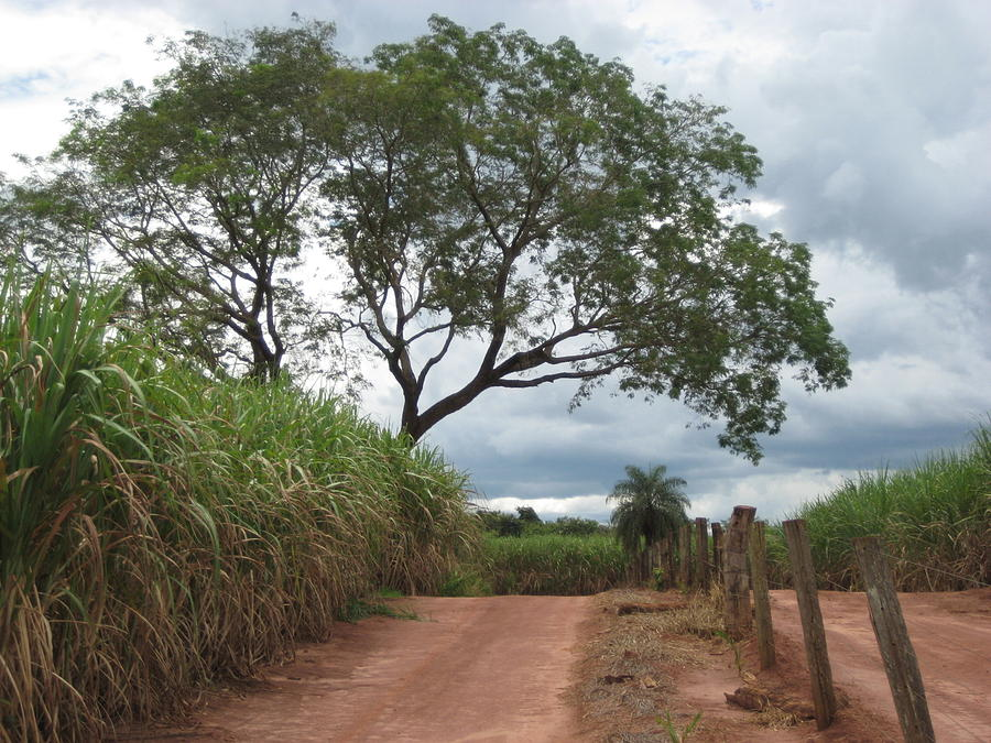 Brasil Rural 1 Photograph by Maria Akemi  Otuyama