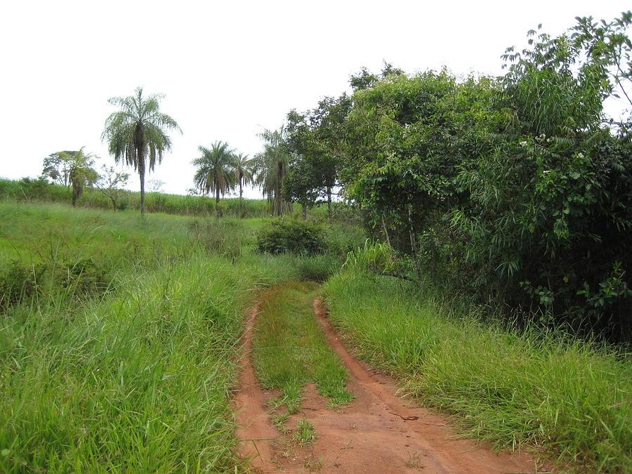 Brasil Rural 3 Photograph by Maria Akemi  Otuyama