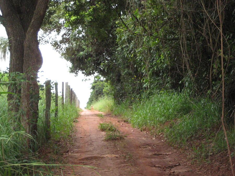 Brasil Rural 4 Photograph by Maria Akemi  Otuyama