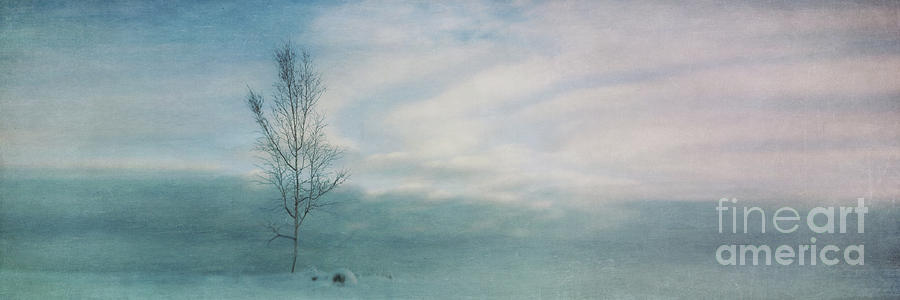 Tree Photograph - Brave The Black Frost by Priska Wettstein