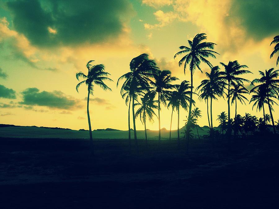 Brazil Palm Trees At Sunset Photograph By Patricia Awapara