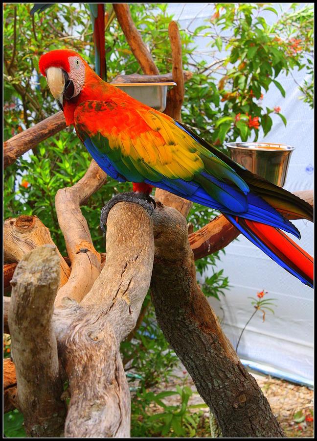 Brazilian Parrot Photograph - Brazilian Parrot by Dora Sofia Caputo Photographic Design and Fine Art