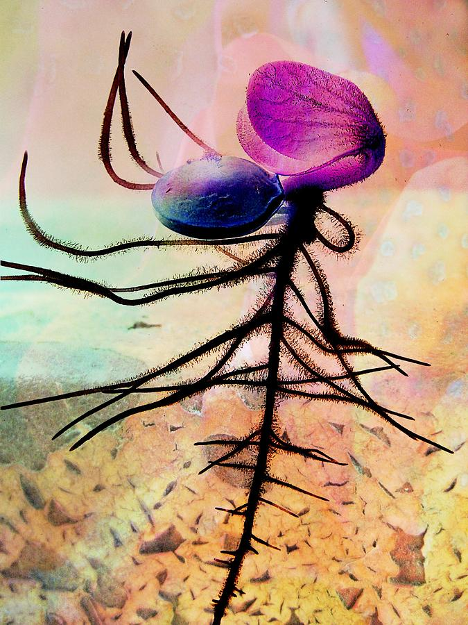 Seed Photograph - Break Forth Into Joy by Shirley Sirois