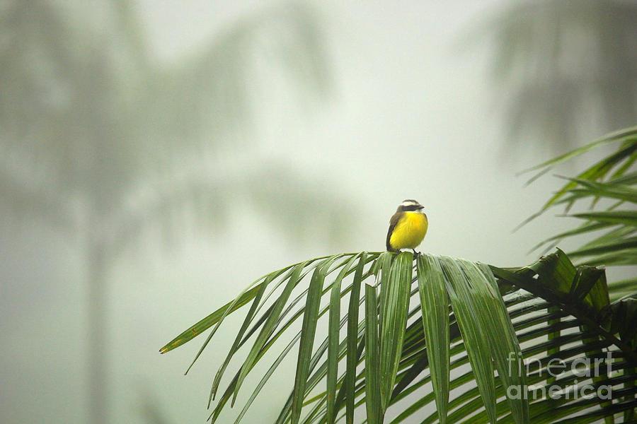 Rain Forest Photograph - Break from the Crowds - Costa Rica by Matt Tilghman