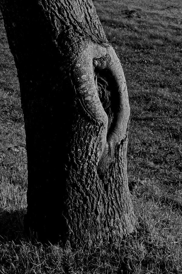 Break In The Skin Photograph - Break In The Skin by Odd Jeppesen