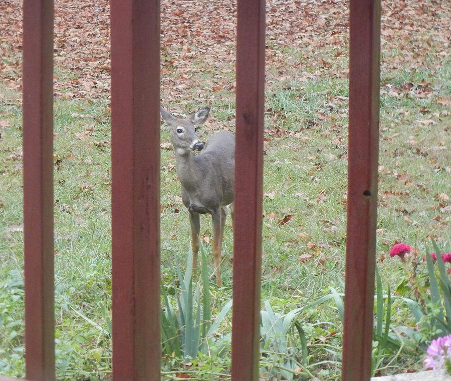 Deer Photograph - Breakfast Ready? by Cathy Pierce Payne