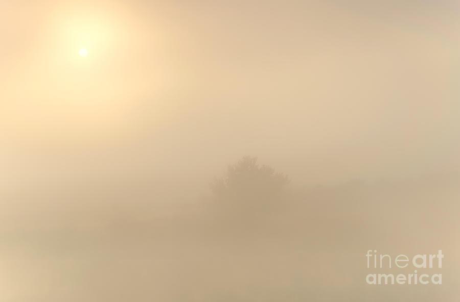 Fog Photograph - Breaking Through by Mike  Dawson