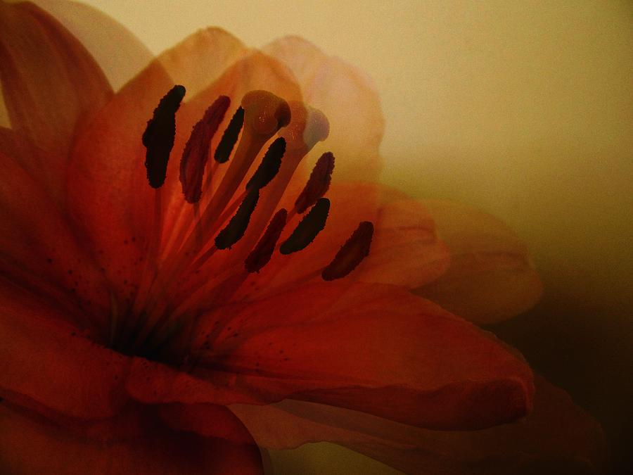 Breath Of The Lily Photograph - Breath Of The Lily by Marianna Mills