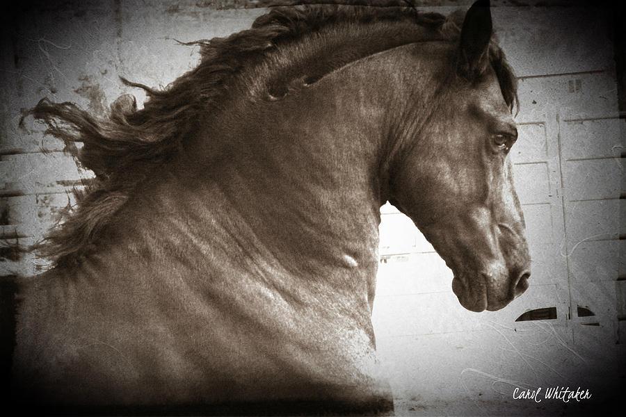 Breathless Photograph by Royal Grove Fine Art