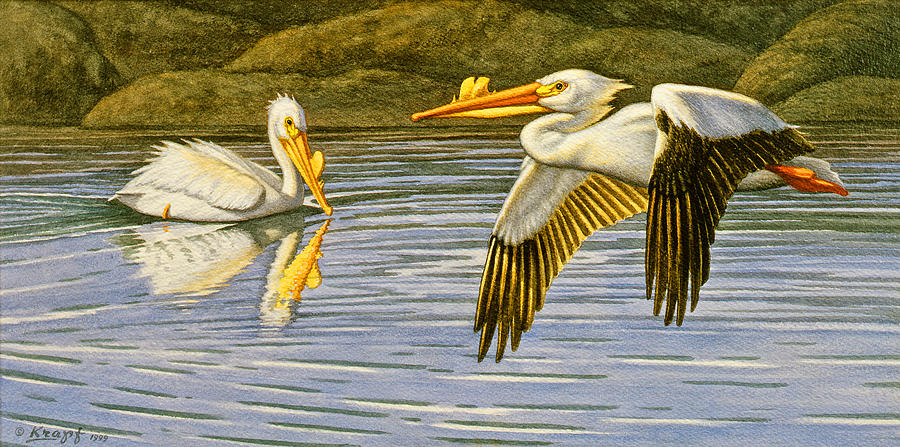 Wildlife Painting - Breeding Season- White Pelicans by Paul Krapf