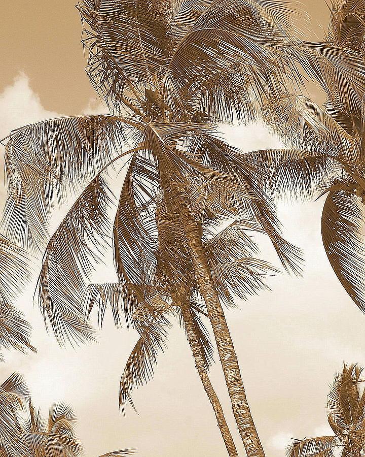 Prints Photograph - Breeze by Athala Carole Bruckner