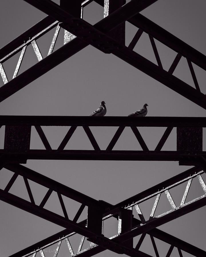 Pigeon Photograph - Bridge Abstract by Bob Orsillo