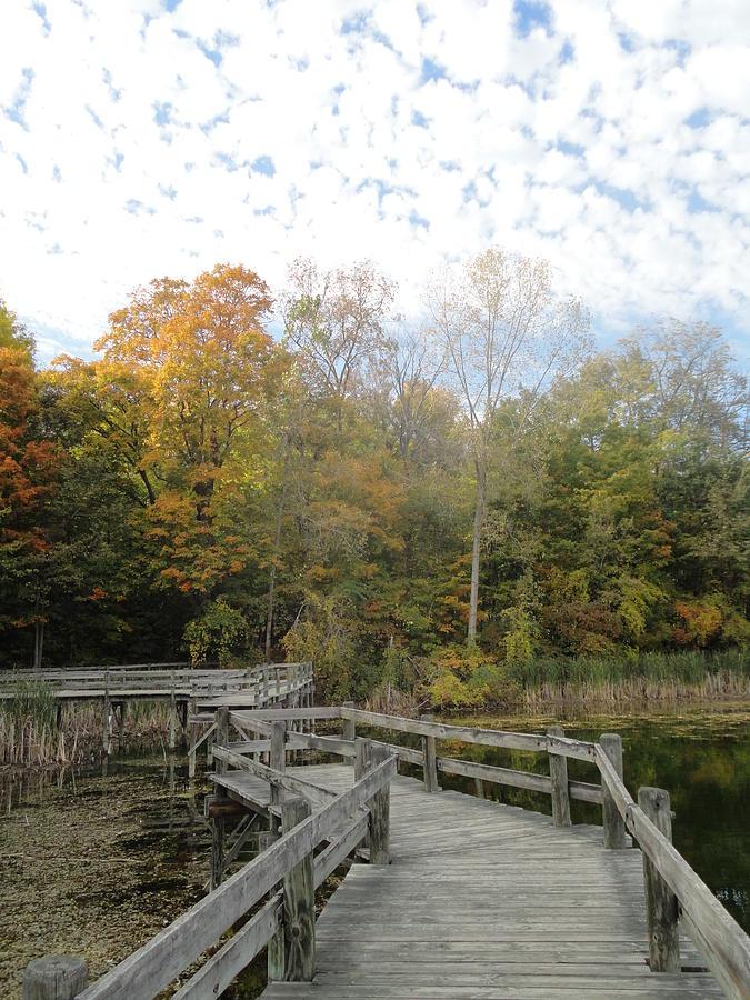 Trees Photograph - Bridge Into Autumn by Guy Ricketts