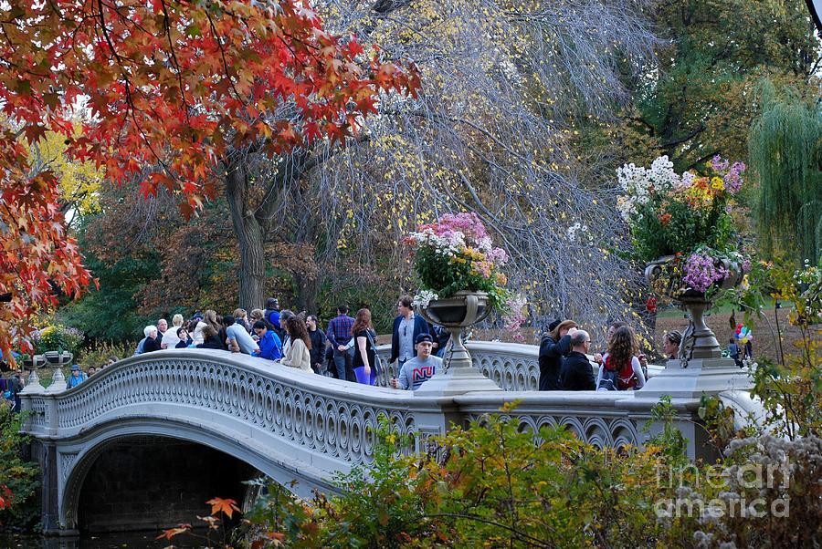 Central Park Bridge Photograph - Bridge Of Life by Andrea Simon