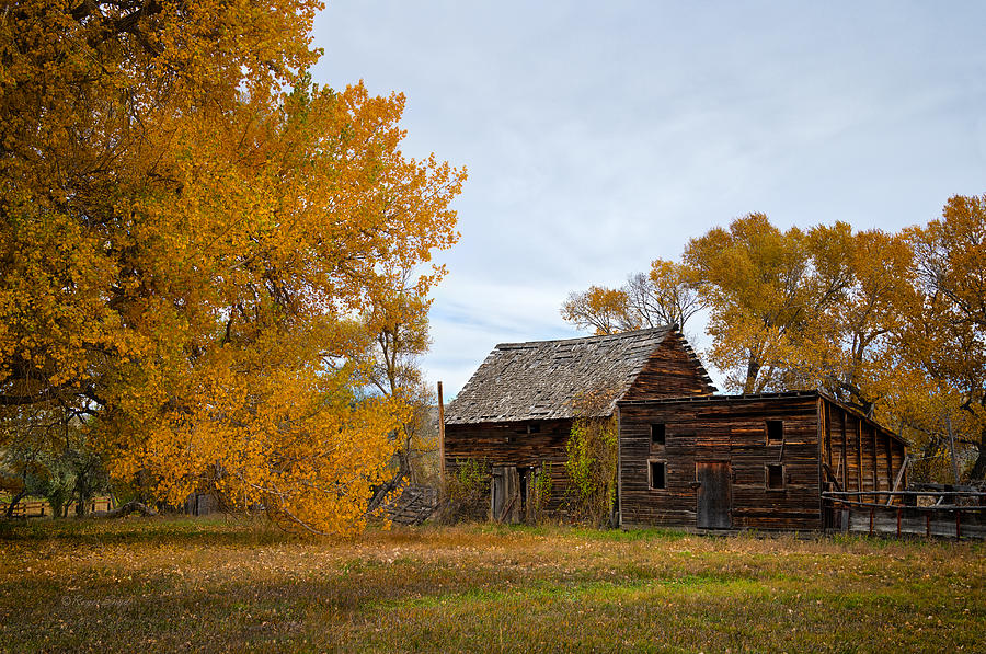 Beautiful Photograph - Bridger Mt Sheds 1 by Roger Snyder
