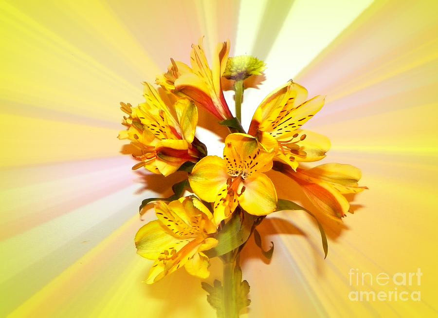 Sunshine Photograph - Bright As The Sun by Carol Grenier