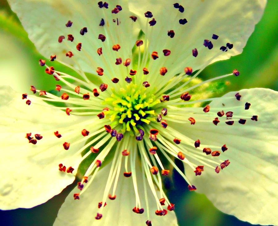 Flower Photograph - Bright Bloom by Candice Trimble