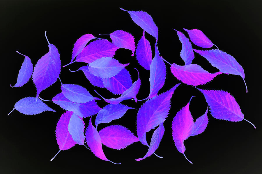 Bright Coloured Leaf Fantasy On Black Photograph by Rosemary Calvert