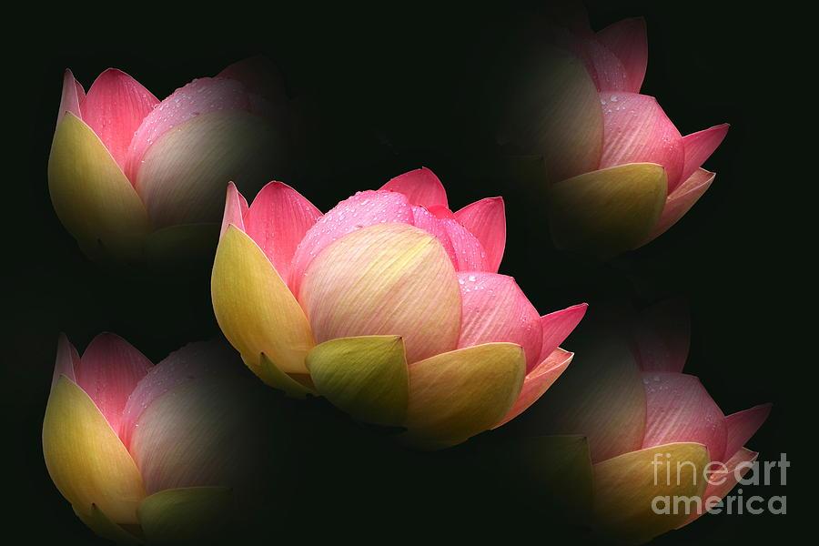 Bright Lotus Echoes by Byron Varvarigos