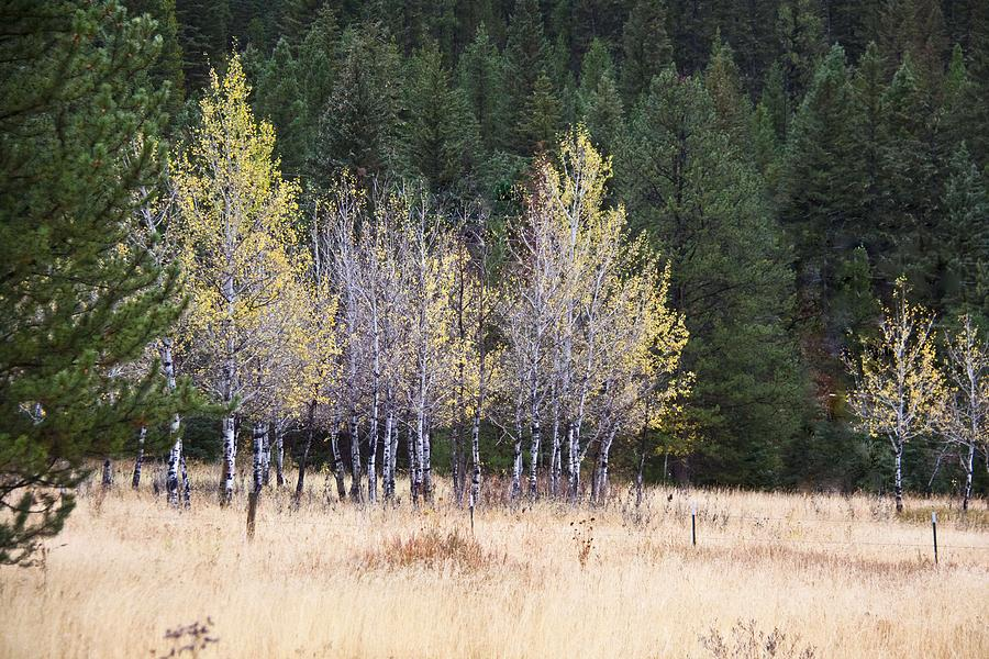 Susan Photograph - Bright Yellow And Green by Susan Crossman Buscho