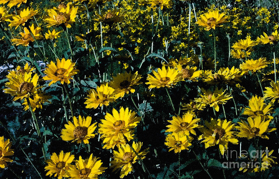 Garden Photograph - Brillant Flowers Full Of Sunshine. by James Rabiolo