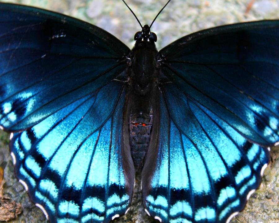 Butterfly Photograph - Brilliant Butterfly by Candice Trimble
