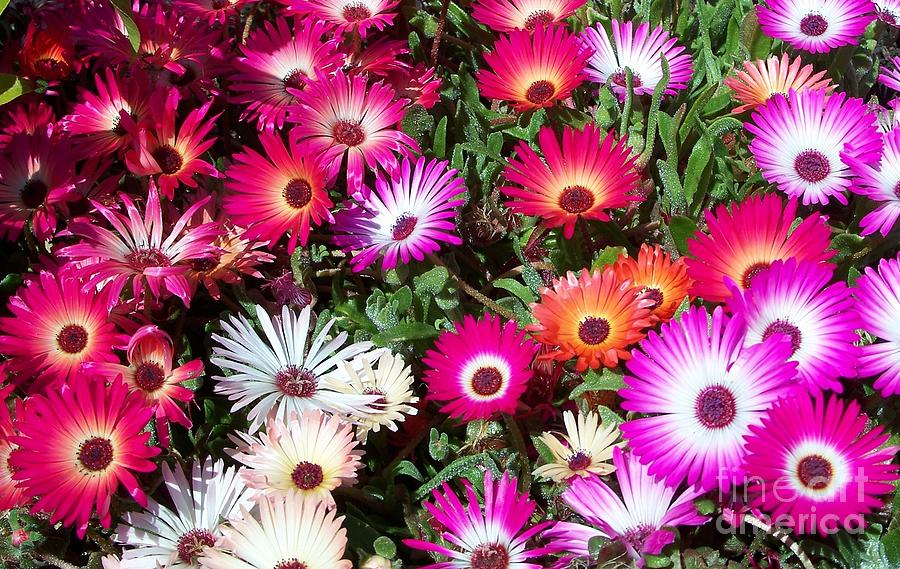 Floral Photograph - Brilliant Flowers by Chalet Roome-Rigdon