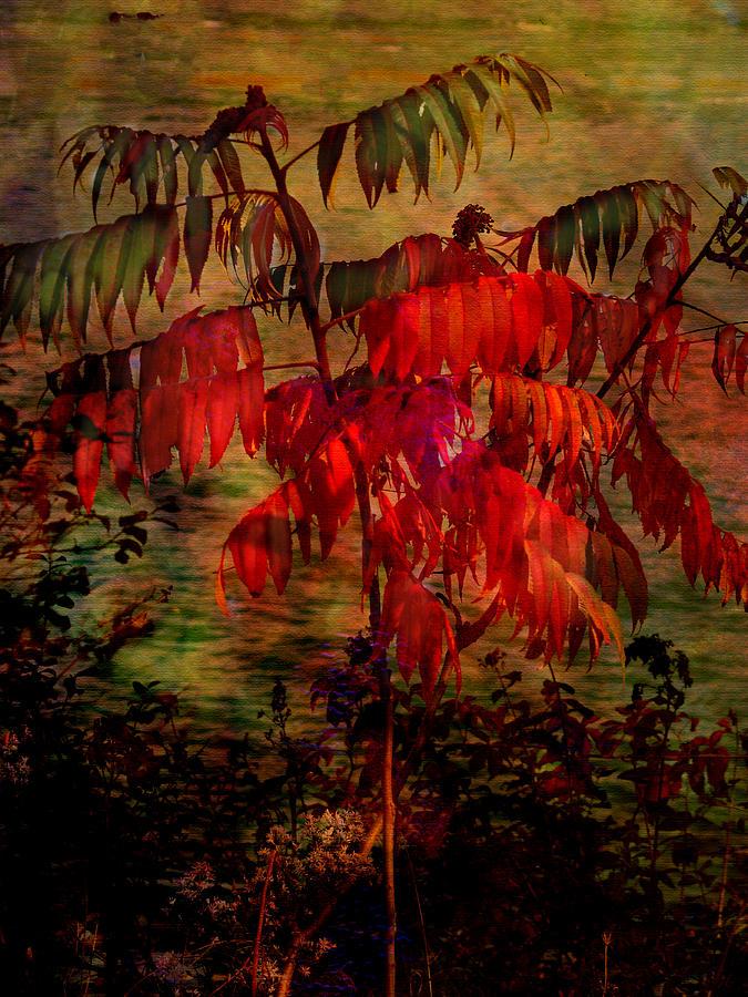 Landscape Photograph - Brilliant Sumac by Julika Winkler