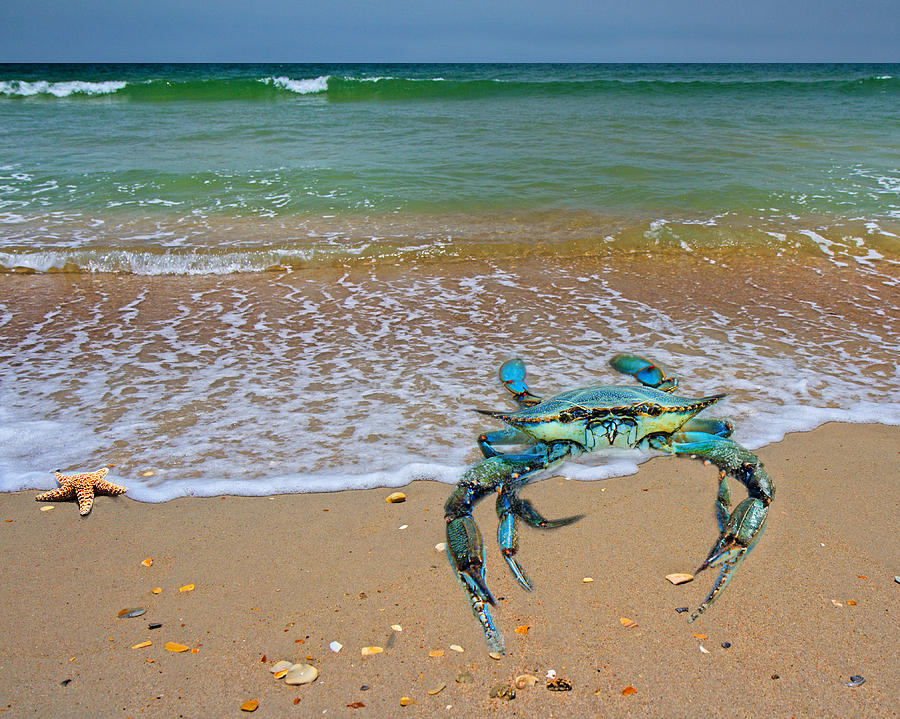 Blue Digital Art - Brilliant Vivid Life Creatures by Betsy Knapp