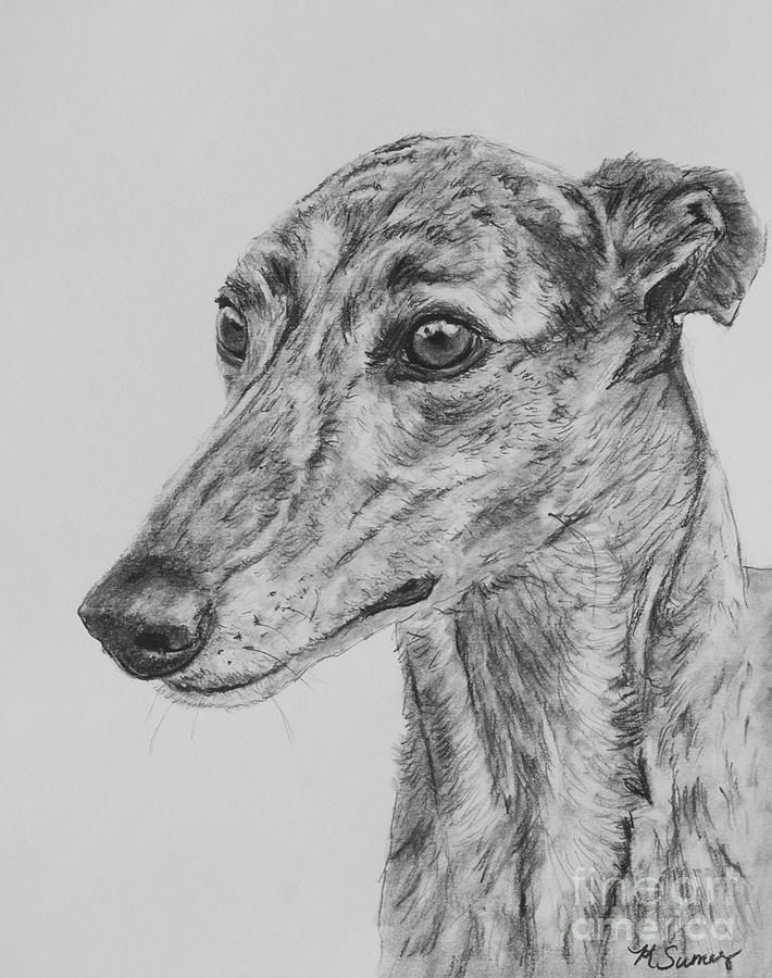 Greyhound Drawing - Brindle Greyhound Face in Profile by Kate Sumners