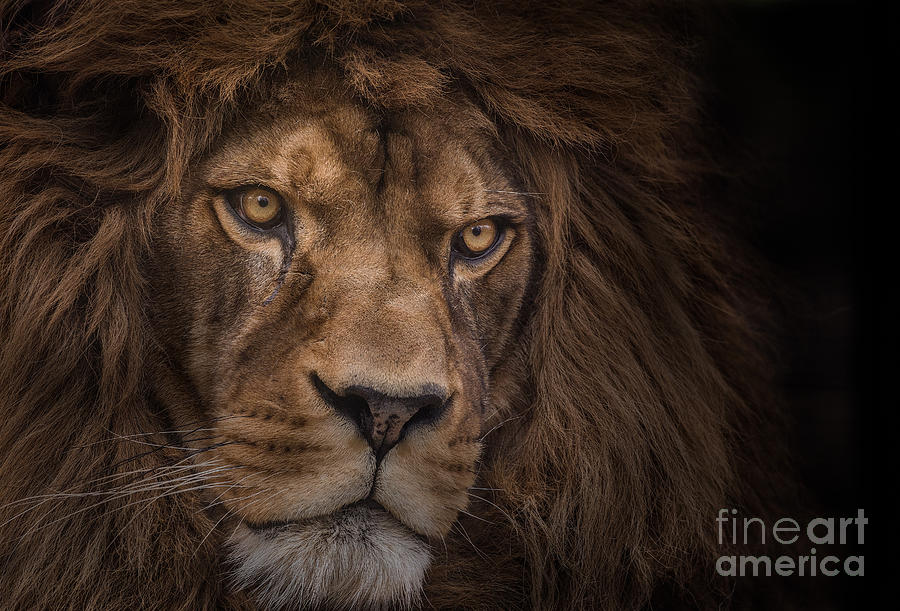 Africa Photograph - Brink Of Extinction by Ashley Vincent