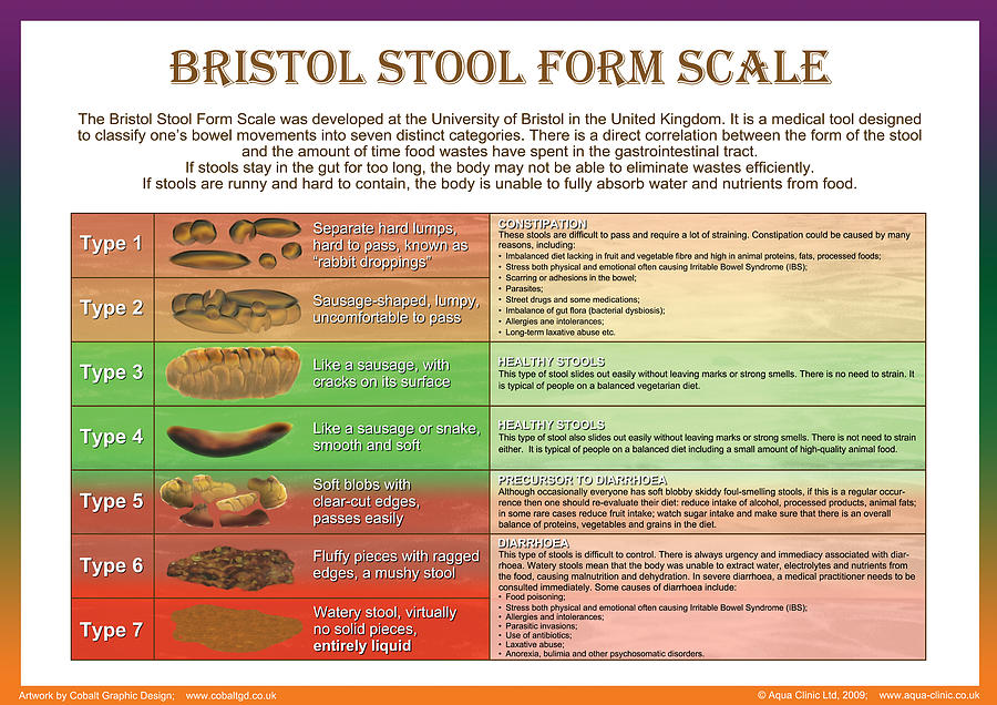 Bristol Stool Form Scale Digital Art By Galina Imrie