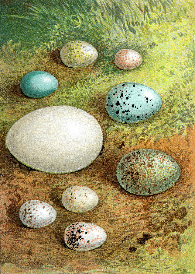 British - European Birds Eggs Digital Art by Andrew howe