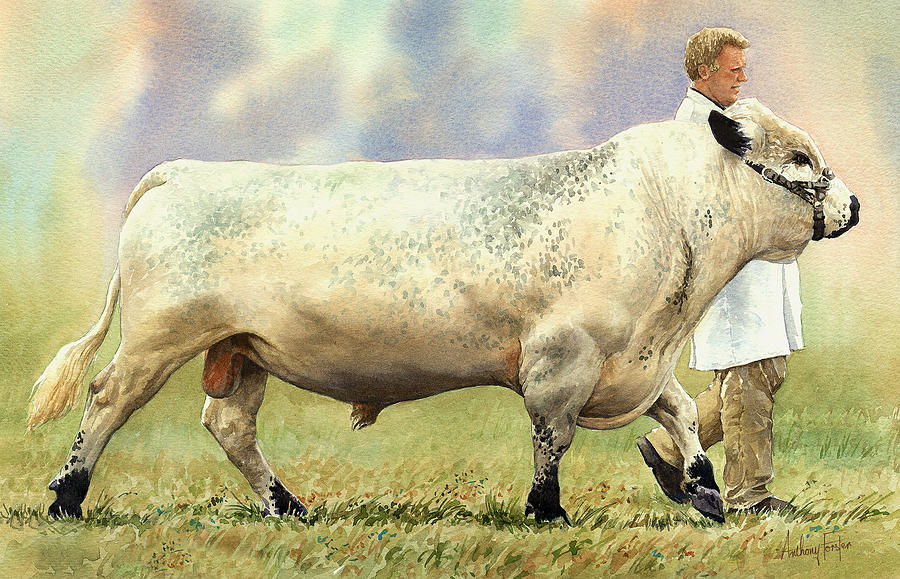 British White Bull Painting by Anthony Forster