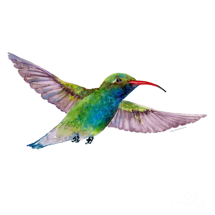 Broad Billed Hummingbird Painting