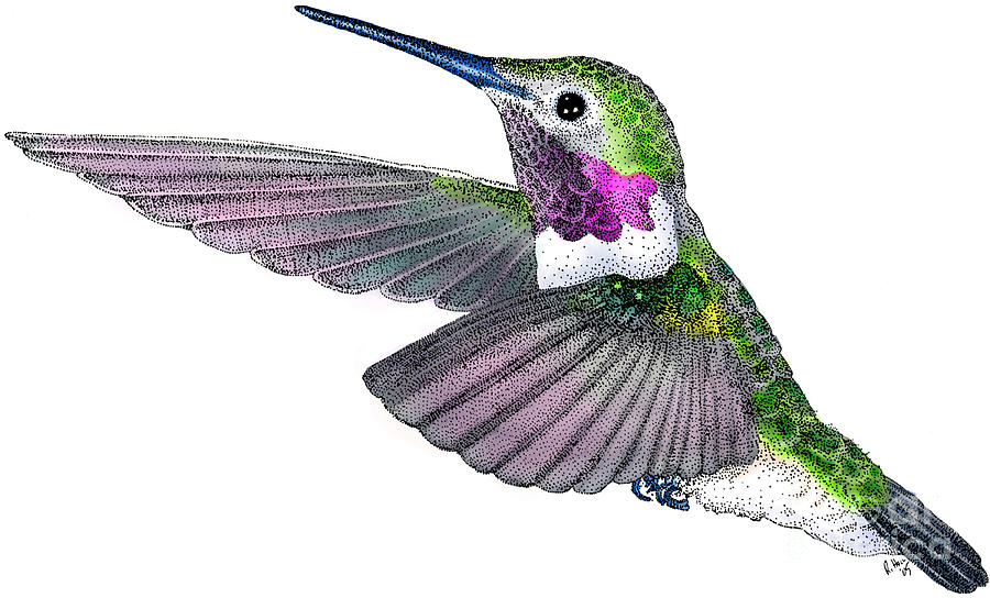 Artwork Photograph - Broad-tailed Hummingbird by Roger Hall